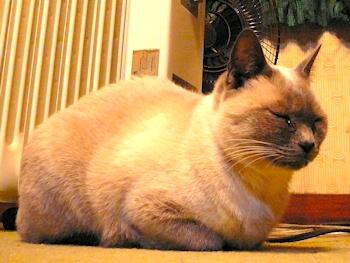 20110101_cat_2
